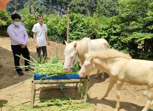 Anh Ngô Văn Tặng thôn Diễn xã Yên Thịnh đang chia sẻ về cách chăm sóc ngựa bạch  để đạt hiệu quả kinh tế cao.jpg