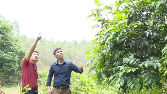 Khảo sát kiểm tra mô hình trồng Trám đen tại xã Quyết Thắng.jpg