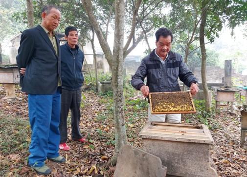 Mô hình nuôi ong lấy mật của gia đình Ông Nguyễn Công Khai, thôn Cã Ngoài xã Minh Sơn.jpg