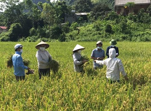 Thực hiện gặt điểm tại cánh đồng thôn Điển Trên xã Thanh Sơn.jpg